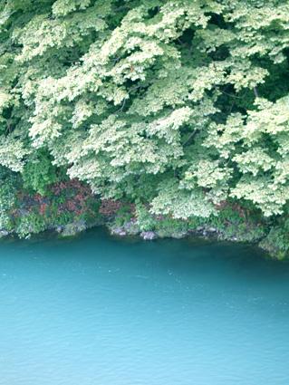 tamagawa0806-6.jpg